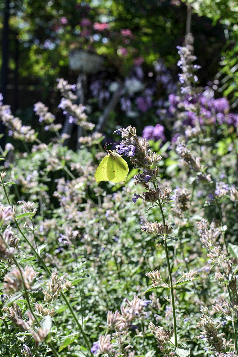 Die Gartentrends 2018 und deine To-Do Liste im Garten von Juli bis August