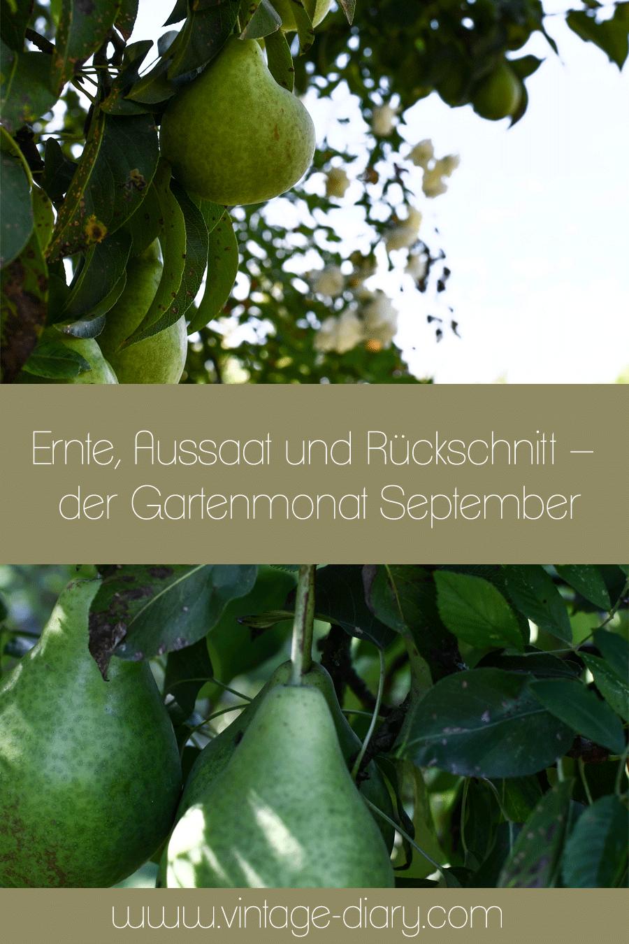 Ernte, Aussaat und Rückschnitt – der Gartenmonat September
