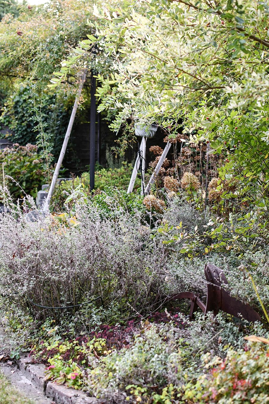 Tiere- und Pflanzen schützen im Gartenmonat November
