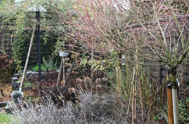 Der Gartenmonat Februar: Pflege und Aussaat