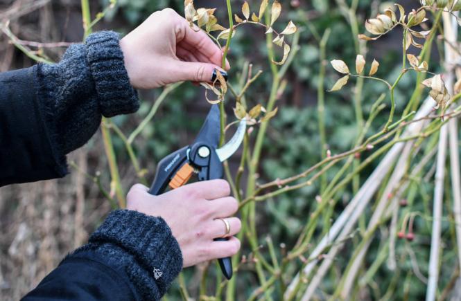 Der Gartenmonat März: Schnitt – und Rasenpflege