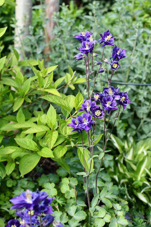Tag des Gartens - Kleine Gärten, bunte Vielfalt