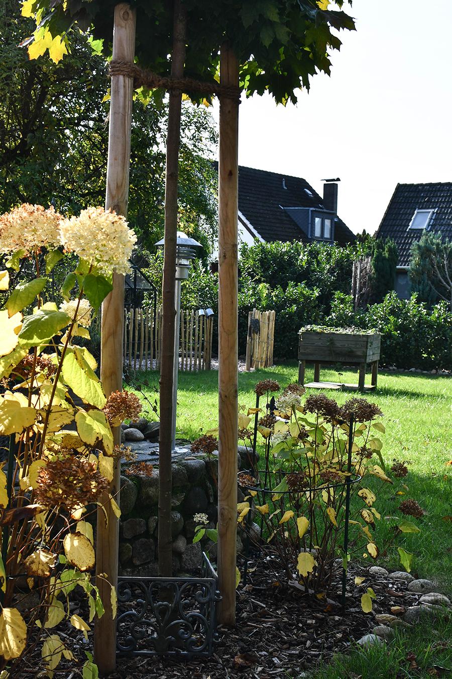 Gartenmonat November: Wintervorbereitung, Rückschnitt, Neupflanzung