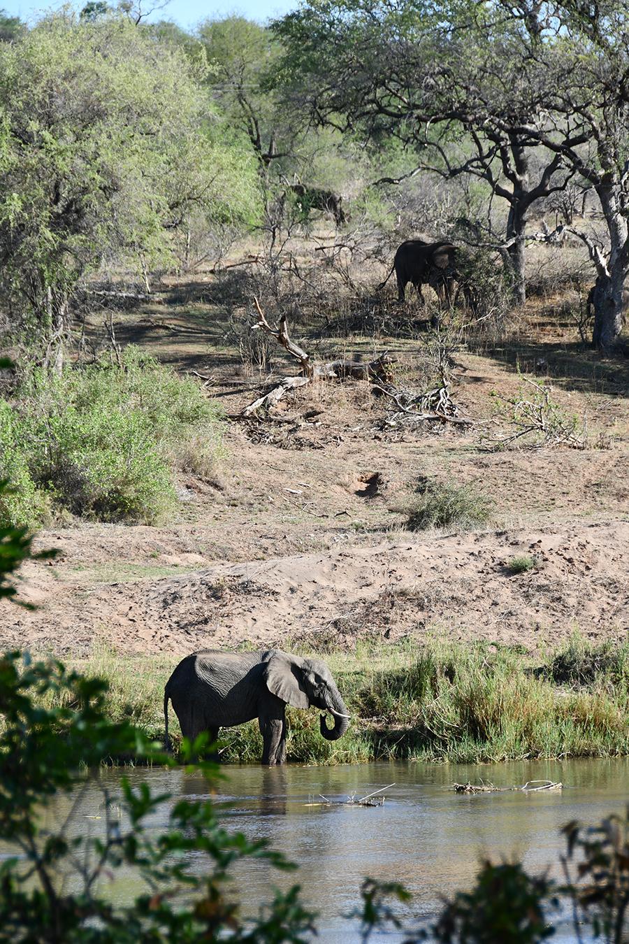 Südafrika: Lodges & Safaris