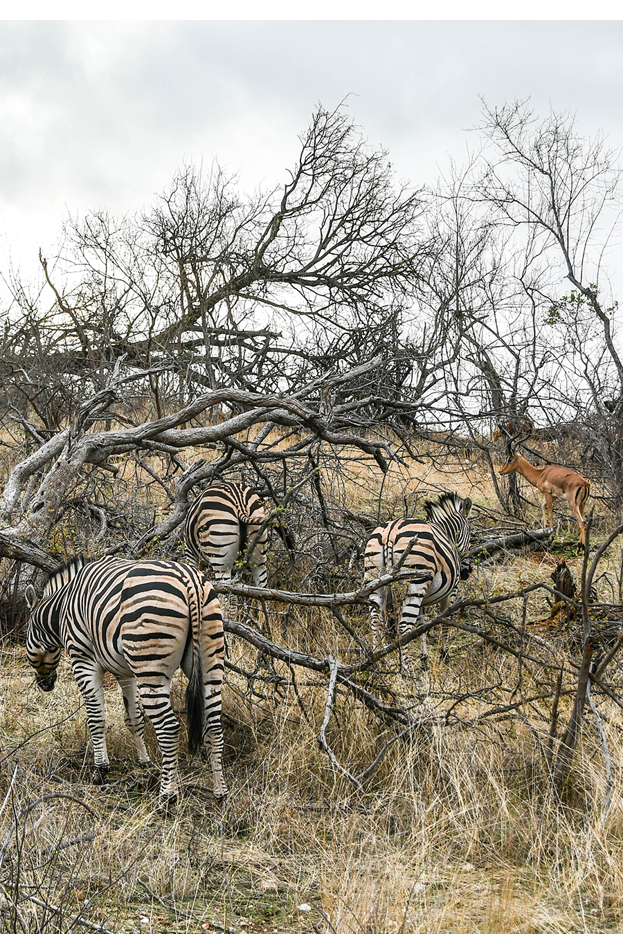 Reisebericht Südafrika: Lodges & Safari