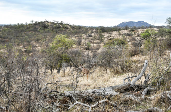 Reisebericht Südafrika: Lodges & Safaris