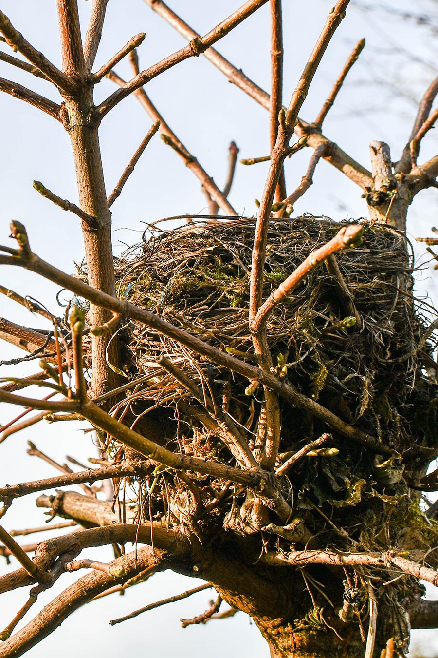 Gartenarbeit im Februar: Schnitt, Aussaat, Tier- und Frostschutz