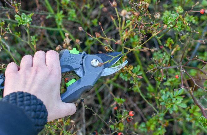 Gartenarbeit im März: Pflanzenschnitt und Beetpflege