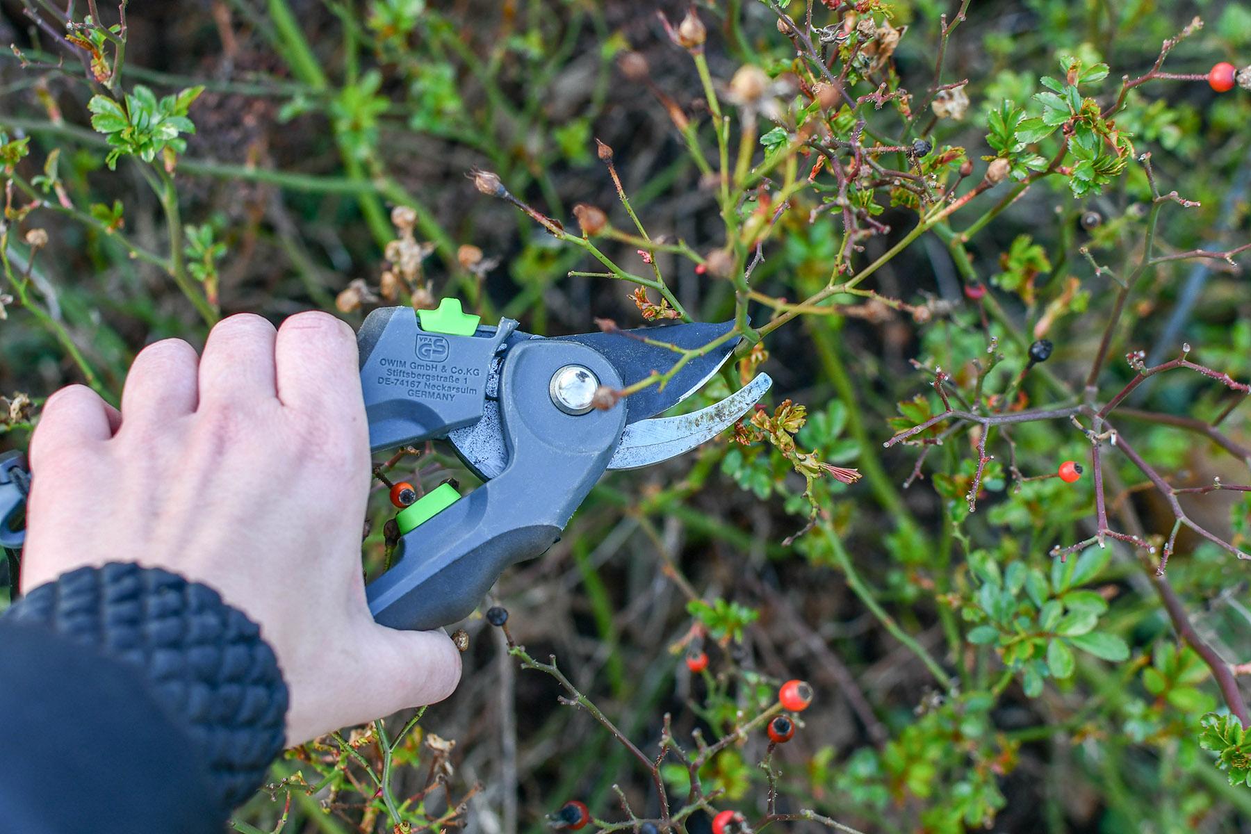 Gartenarbeiten März