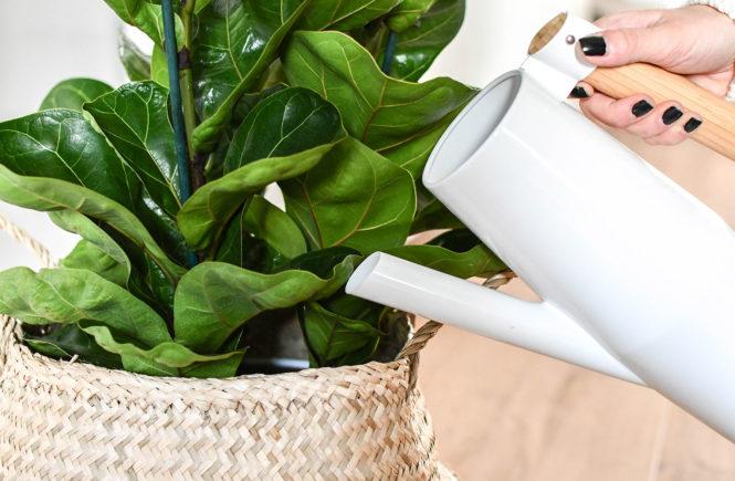 Zimmerpflanzen richtig pflegen - Tipps & Tricks