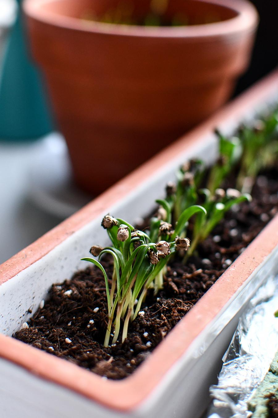 Gemüse säen und vorziehen